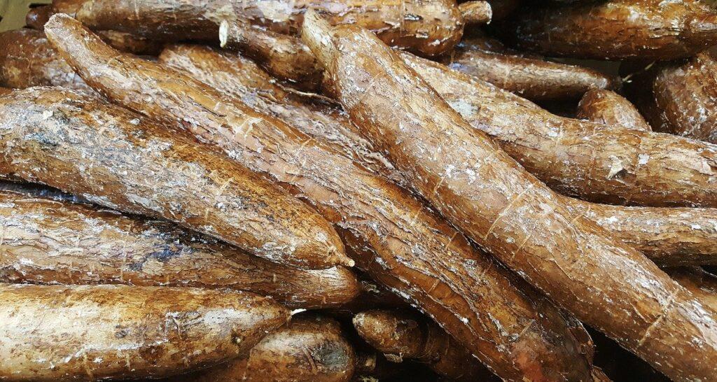A farinha de mandioca preserva tradição alimentar indígena, e seu processamento em engenhos veio com a chegada dos colonizadores portugueses.